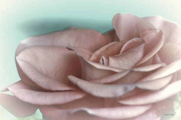 Photograph - A Roses Solitude Pink by Lesa Fine