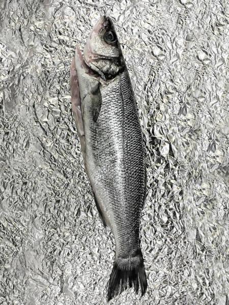 Wall Art - Photograph - A Sea Bass by Tom Gowanlock