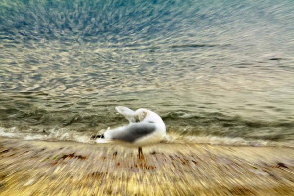 Wall Art - Photograph - A Seabird's Dream by Julius Reque
