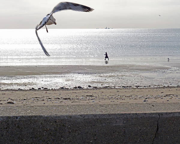 Photograph - A Seagull Takes Off On Revere Beach Revere Ma by Toby McGuire