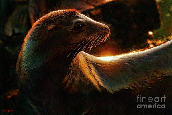 Photograph - A Seal's Profile by Blake Richards