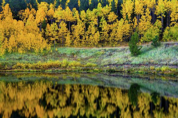 Photograph - A Season Of Gold by John De Bord