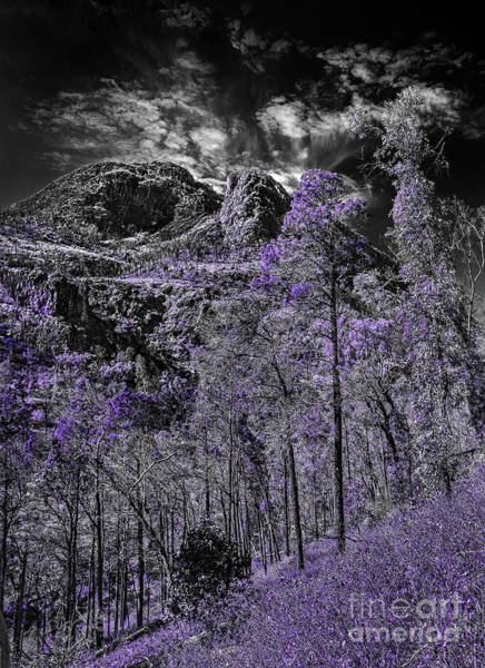 Photograph - A Season Of Lilac by Russell Brown