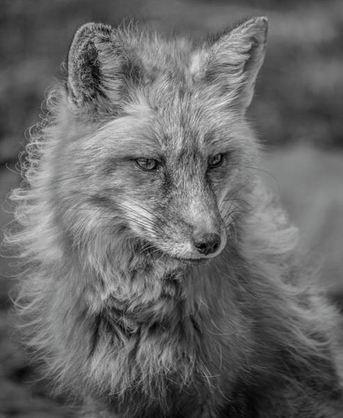 Photograph - A Sideways Glance Black And White by Teresa Wilson