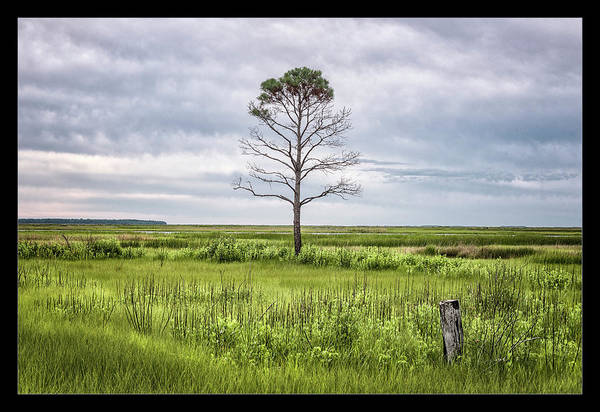 National Wildlife Refuge Wall Art - Photograph - A Simple Tree by Robert Fawcett