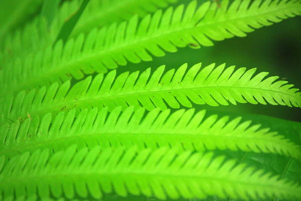 Brillante Photograph - A Simply Green Fern by HQ Photo