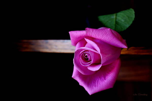 Photograph - A Single Rose by Joanne Smoley