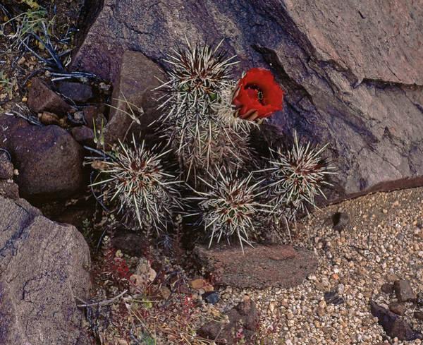 Photograph - A Singular Bloom by Paul Breitkreuz
