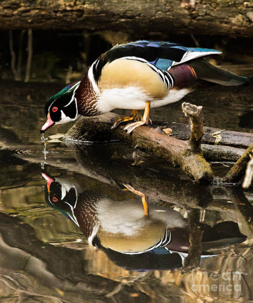 Photograph - A Sip For You And Me Bird Art By Kaylyn Franks by Omaste Witkowski