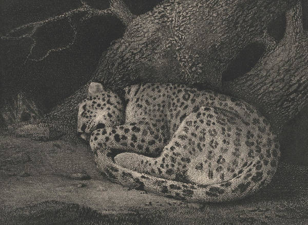 Relief - A Sleeping Leopard by George Stubbs