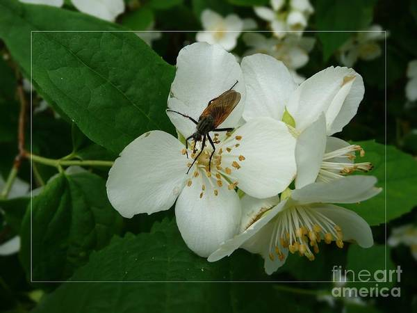 Photograph - A Small Fly by Jean Bernard Roussilhe