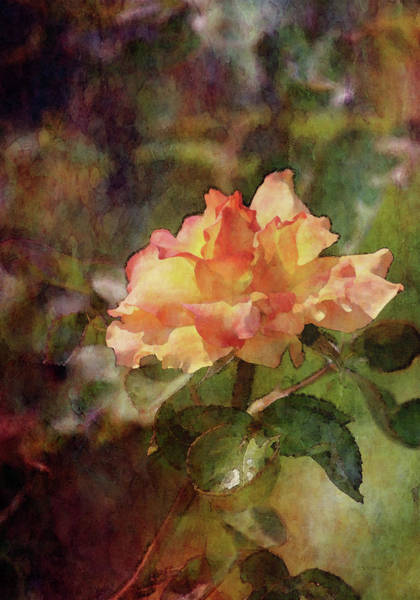 Photograph - A Small Passion 3921 Idp_2 by Steven Ward