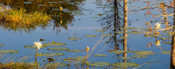 Photograph - A Small Pond by Ed Gleichman