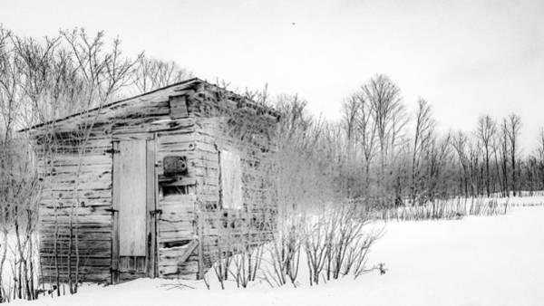 Photograph - A Snowbird Returns by Kendall McKernon
