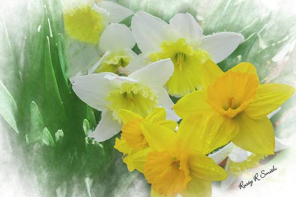 Digital Art - A Soft Group Of Yellow And White Daffodiles. by Rusty R Smith