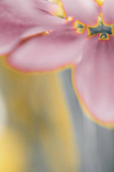 Photograph - A Soft Interlude by John De Bord