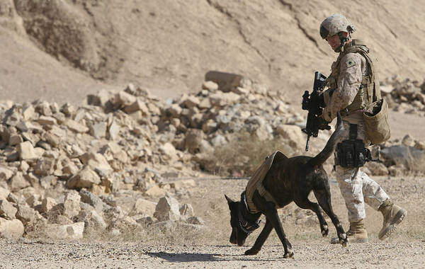 Photograph - A Soldier And His Dog Search An Area by Stocktrek Images