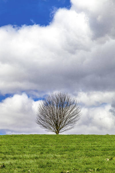 Wall Art - Photograph - A Solitary Tree On A Grassy Hill by W Chris Fooshee