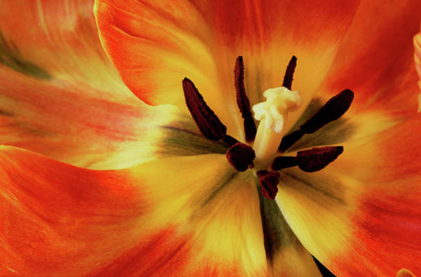 Stamens Photograph - A Song From The Heart by Bill Morgenstern
