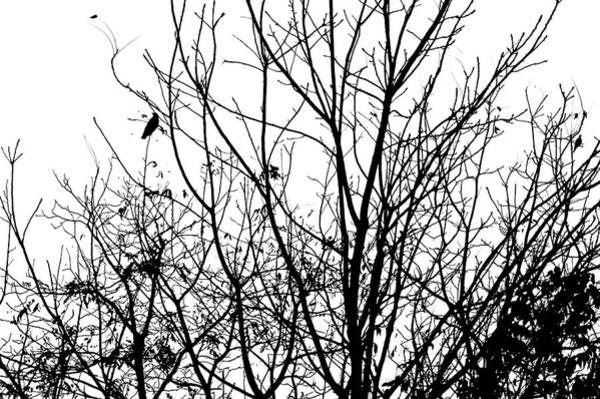 Photograph - A Song Of Autumn by Susan Maxwell Schmidt