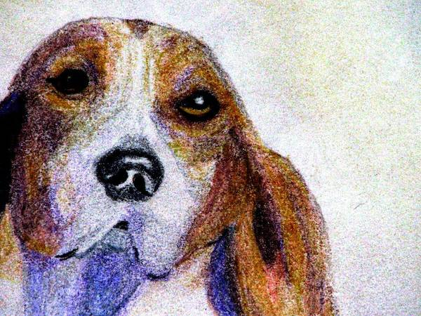 A Soulful Hound Art Print