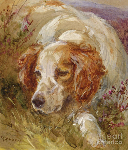 Field Spaniel Painting - A Spaniel by James Hardy Junior