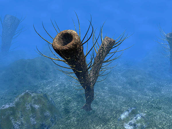 Paleobotany Digital Art - A Species Of Pirania, A Primitive by Walter Myers