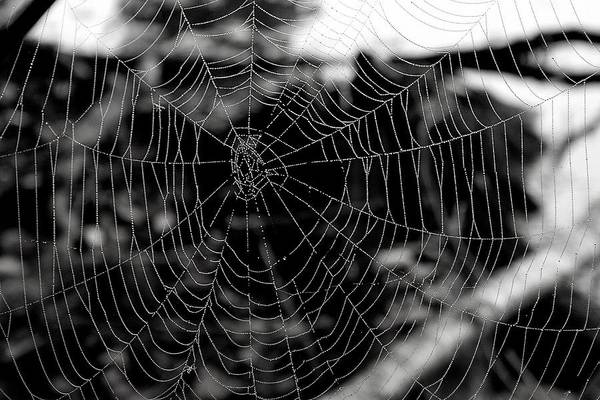 Photograph - A Spider's Masterpiece by Polly Castor