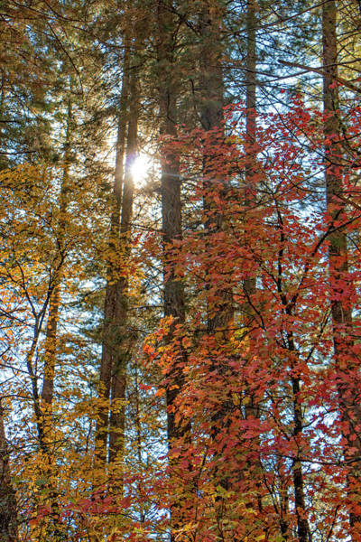 Photograph - A Spot Of Fall Color by Teresa Wilson