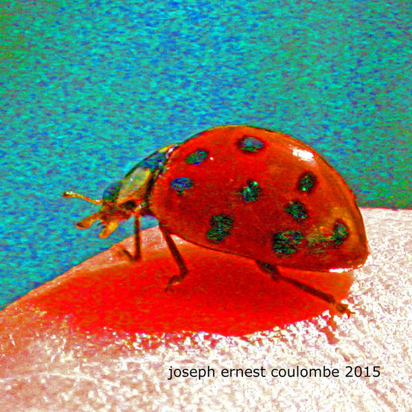 Digital Art - A Spring Lady Bug by Joseph Coulombe