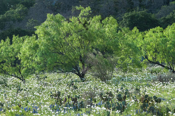 Photograph - A Spring Scene In Texas. by Usha Peddamatham