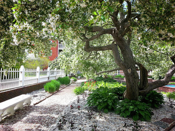 Photograph - A Springtime Carpet Of White Petals From A Tree by Natalie Rotman Cote