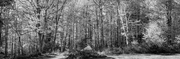 Photograph - A Stand Of Trees by David Patterson