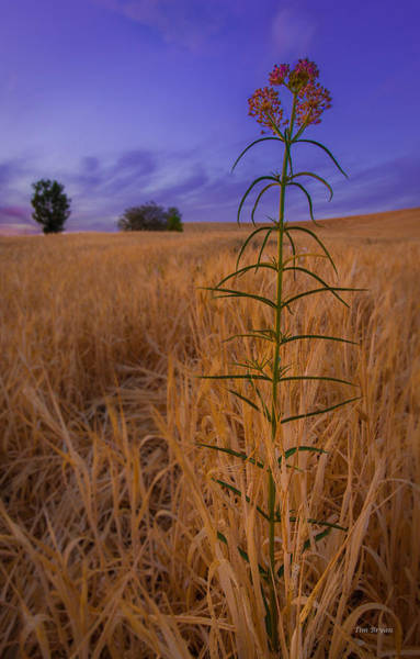 Photograph - A Standout In His Field by Tim Bryan