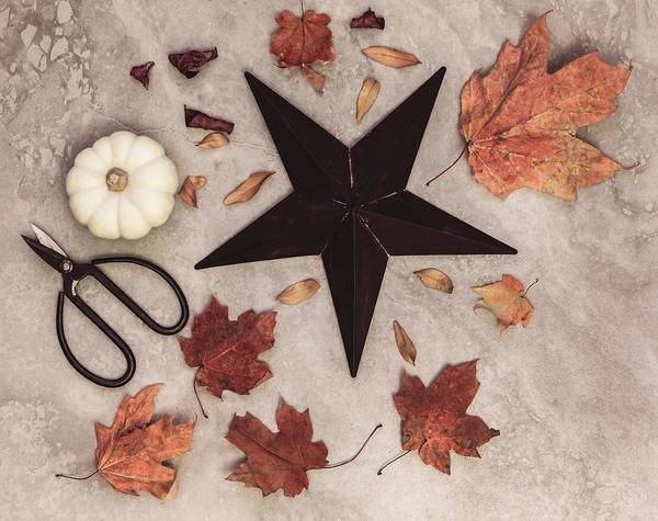 Photograph - A Star Among The Autumn Leaves by Kim Hojnacki