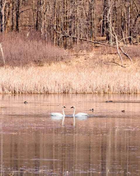 Photograph - A Stark Winter Day by Susan Rissi Tregoning