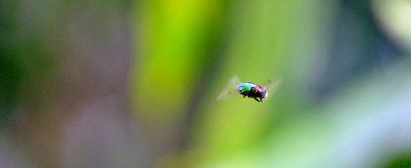 Brillante Photograph - A Static Fly by HQ Photo