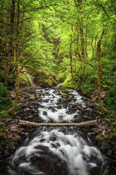 Photograph - A Stream In Oregon by Wes and Dotty Weber