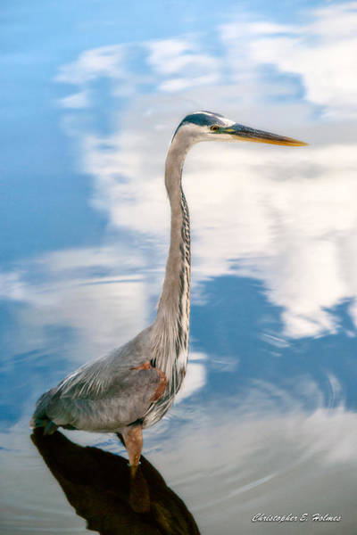 Photograph - A Stroll Among The Clouds by Christopher Holmes