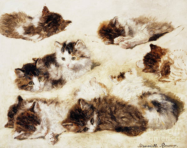 Curl Up Painting - A Study Of Kittens by Henriette Ronner-Knip
