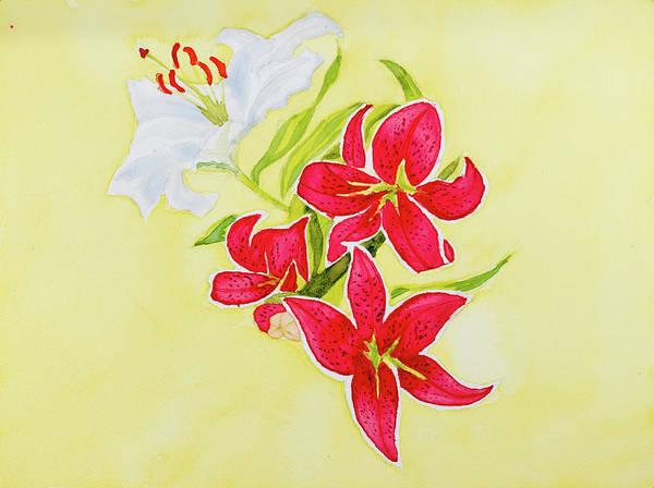 A Study Of Lilies Art Print
