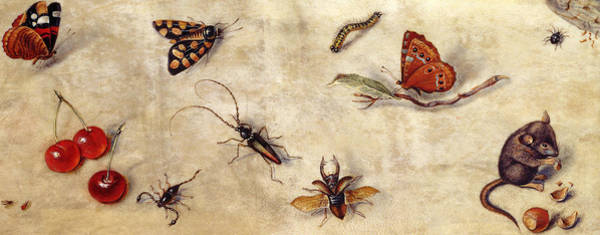 Wall Art - Painting - A Study Of Various Insects, Fruit And Animals by Jan Van Kessel the Elder