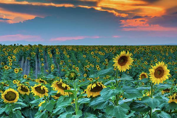 Photograph - A Summer Softness In Colorado by John De Bord