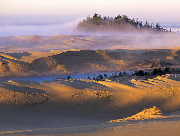 Photograph - A Sunny Morning by Robert Potts