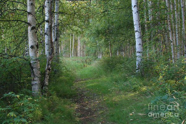Birch River Photograph - A Suspended Silence Where The Wild Things Are by Sharon Mau