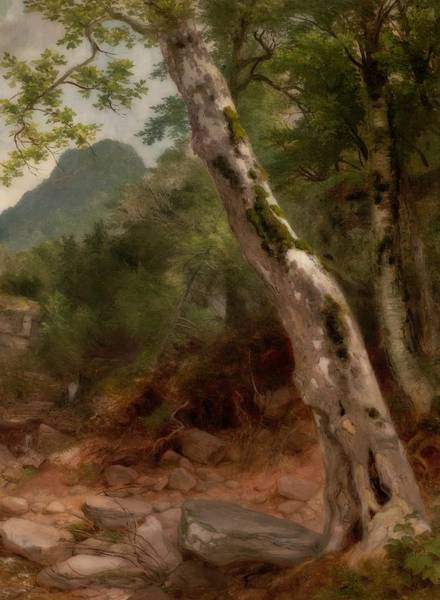 Sycamore Painting - A Sycamore Tree, Plaaterkill Cove by Asher Brown Durand