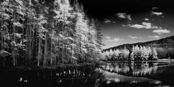 Photograph - A Tamarack Panorama by David Patterson