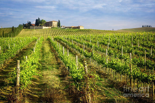 Photograph - A Taste Of Chianti by Scott Kemper