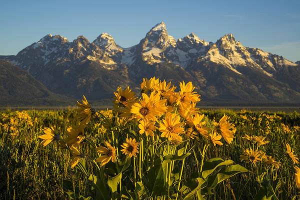 Wall Art - Photograph - A Teton Spring by Peter Irwindale