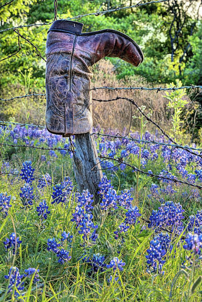Photograph - A Texas Thing by JC Findley